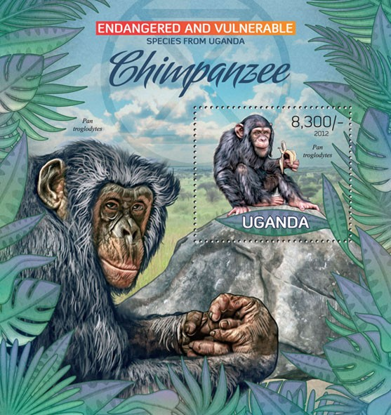 Chimpanzee - Issue of Uganda postage stamps