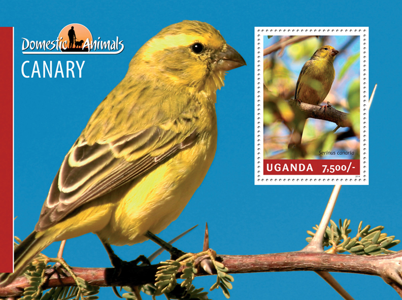 Canary - Issue of Uganda postage stamps