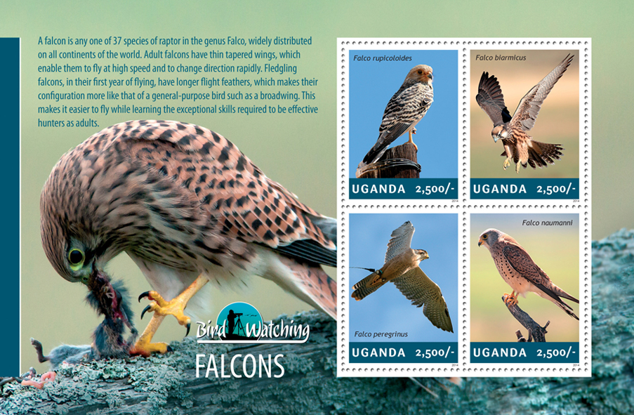 Falcons - Issue of Uganda postage stamps